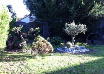 Réalisation du massif décoratif et taille du juniperus en nuage.
