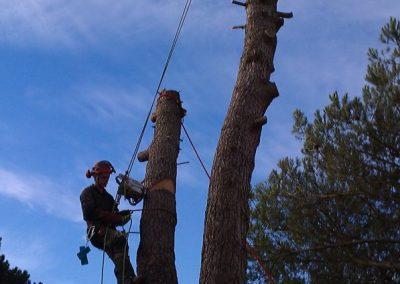 Démontage d'un pin a Saint-Jean de Boiseau
