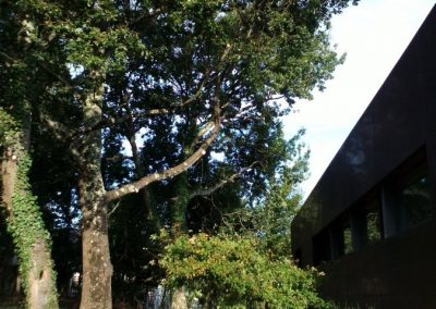 Chantier après intervention. La taille visait à éliminer les branches qui encombraient la façade du bâtiment